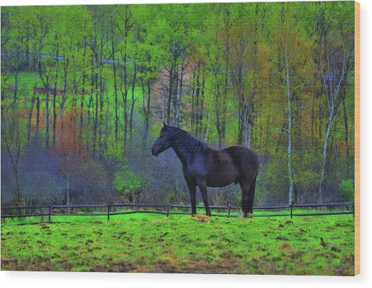 Spring Pasture Wood Print by JAMART Photography