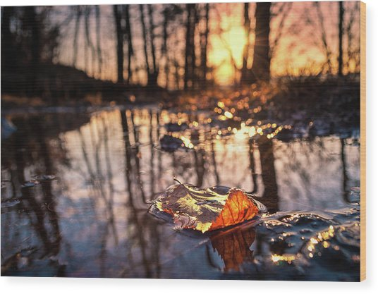 Spring Puddles Wood Print