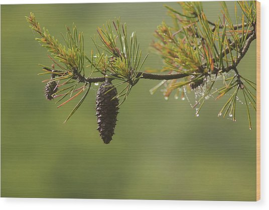 Spring Rain And Pinecone Wood Print