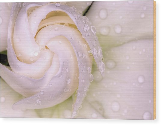 Spring Showers On The Gardenia Wood Print by JC Findley