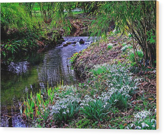 Spring Snowdrops By Stream Wood Print