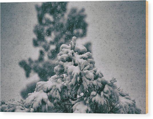 Spring Snowstorm On The Treetops Wood Print