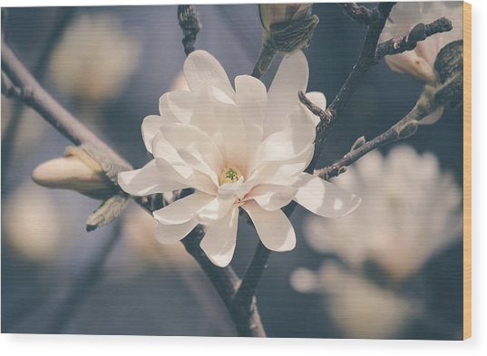 Wood Print featuring the photograph Spring Sonnet by Viviana  Nadowski