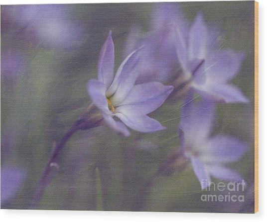 Spring Starflower Wood Print