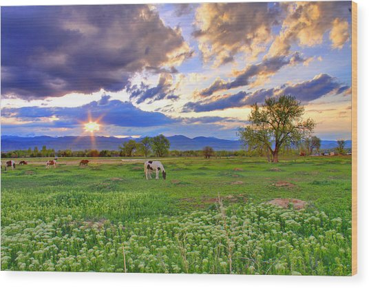 Spring Sunset Over The Rockies Wood Print