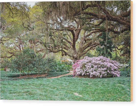 Spring Azaleas In Florida Wood Print
