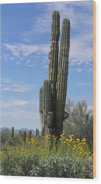 Spring Time In Tucson Wood Print