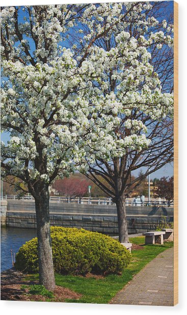 Spring Time In Westport Wood Print