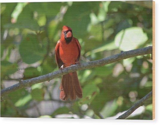 Spring Training Cardinal Wood Print