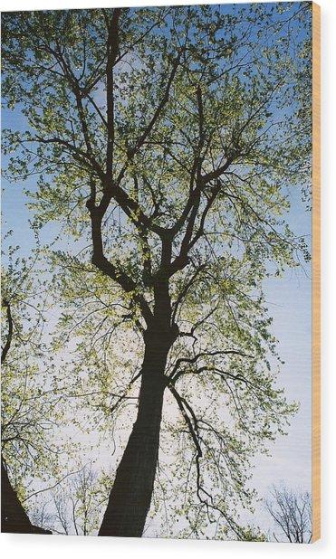 Spring Tree Wood Print by Patrick Murphy