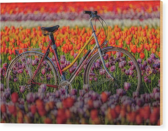 Wood Print featuring the photograph Spring Tulips And Bicycle by Susan Candelario