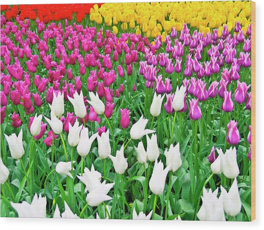 Spring Tulips Flower Field II Wood Print by Artecco Fine Art Photography