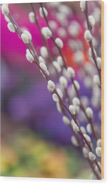 Spring Willow Branch Of White Furry Catkins Wood Print