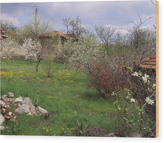 Spring Yard Wood Print by David Du Hempsey