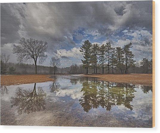 Springtime In Henniker Wood Print