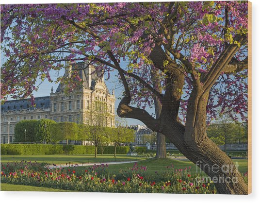 Wood Print featuring the photograph Springtime In Paris by Brian Jannsen