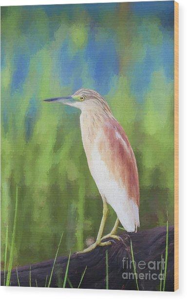 Squacco Heron Ardeola Ralloides Wood Print