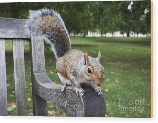 Squirrel Bench Wood Print