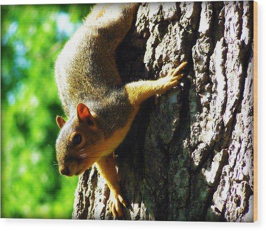 Squirrel Contact Wood Print