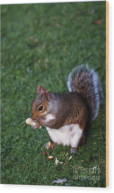 Squirrel Eating Wood Print