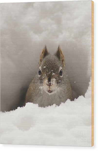 Squirrel In A Snow Tunnel Wood Print