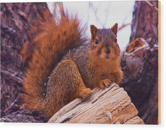 Squirrel In Tree Wood Print
