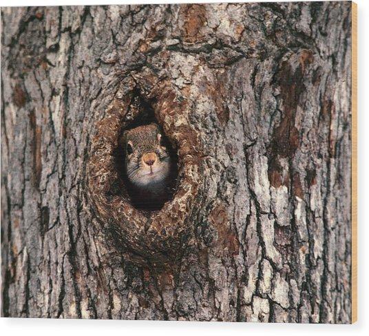 Squirrel Wood Print by Lloyd Grotjan