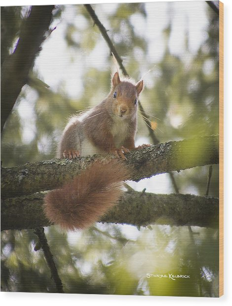 Wood Print featuring the photograph Squirrel On The Spot by Stwayne Keubrick