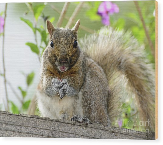 Squirrel Ready To Whistle Wood Print by Susan Wiedmann
