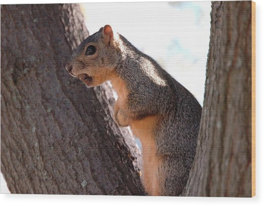 Squirrel With A Nut Wood Print by Teresa Blanton