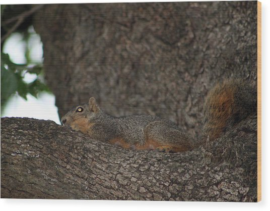 Squirrel1 Wood Print by Evelyn Patrick