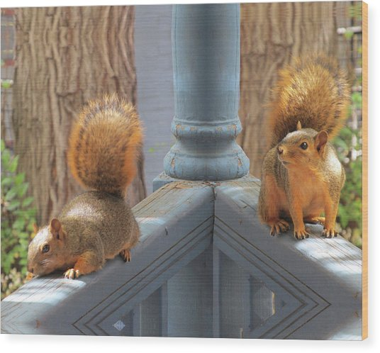 Squirrels Balancing On A Railing Wood Print