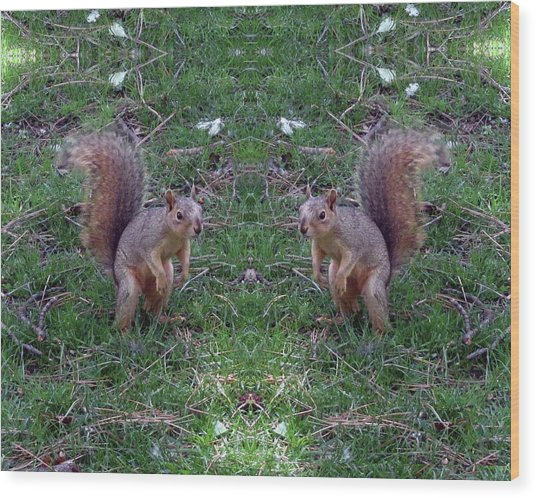 Squirrels With Question Mark Tails Wood Print
