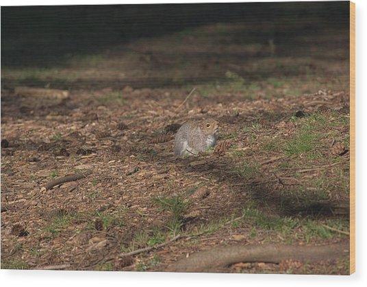 Squirrrrrrel? Wood Print
