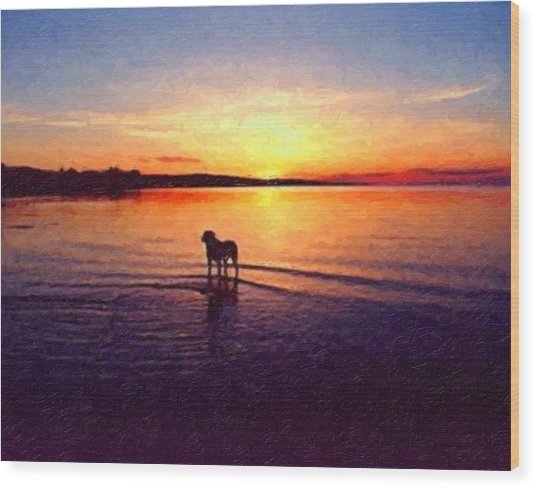 Staffordshire Bull Terrier On Lake Wood Print