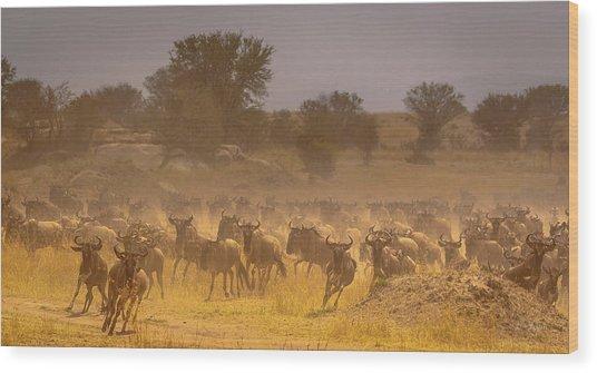 Stampede-serengeti Plain Wood Print