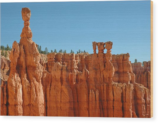 Standing Tall In Bryce Canyon Wood Print