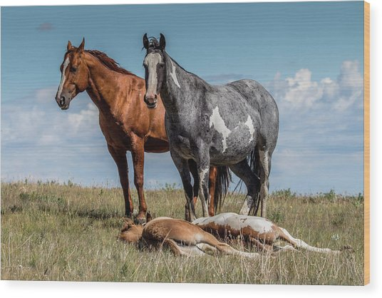 Standing Watch Over The Foals Wood Print