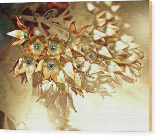 Star Fade Autumn Wood Print