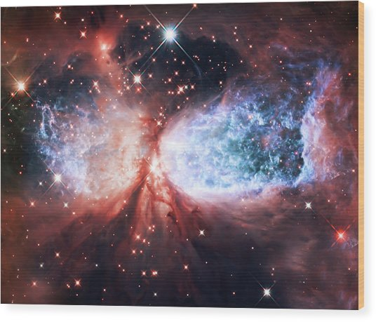 Star Gazer Wood Print