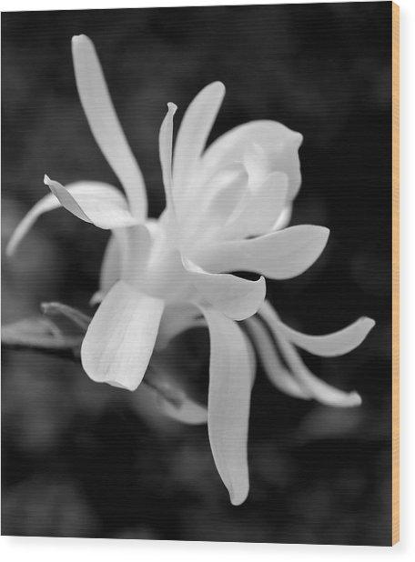 Star Magnolia Flower Black And White Wood Print