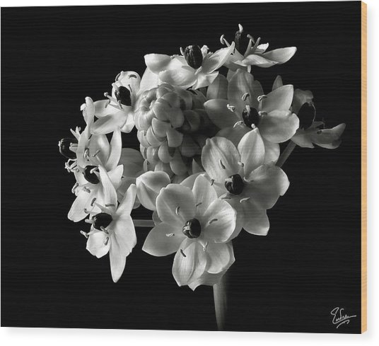 Star Of Bethlehem In Black And White Wood Print