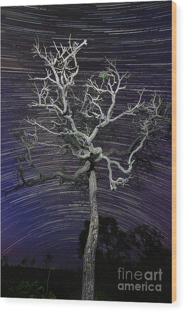 Star Trails In The Cerrado Wood Print