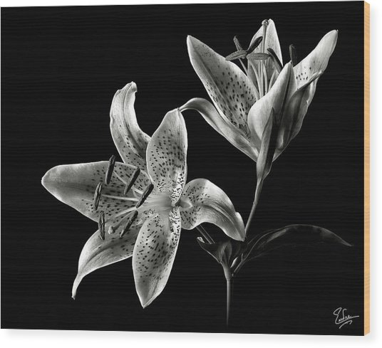 Stargazer Lily In Black And White Wood Print
