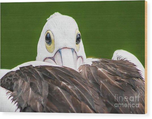 Staring Pelican Wood Print