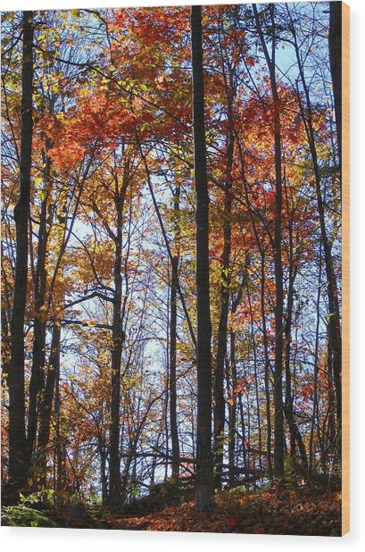 Stark Contrast Wood Print by Dave Martsolf