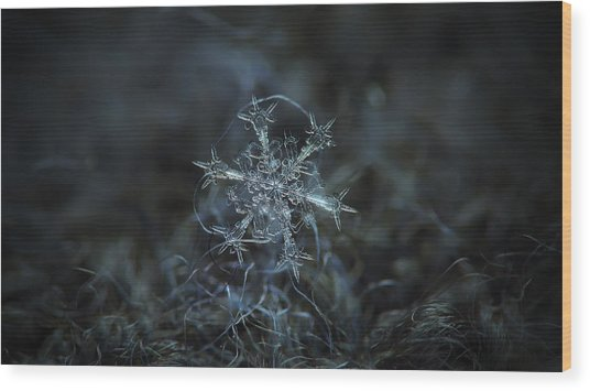 Starlight, Panoramic Version Wood Print