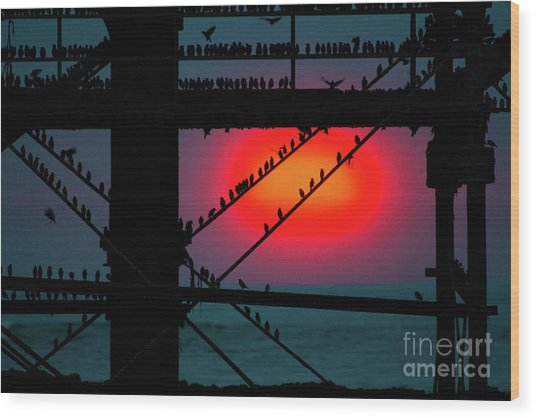 Starlings Against The Setting Sun Wood Print