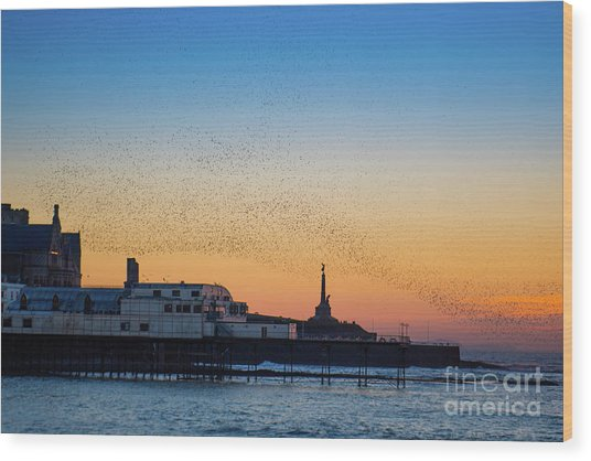 Starlings At Sunset In Aberystwyth Wood Print