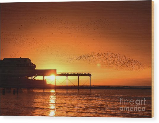 Starlings At Sunset Over Aberystwyth Pier Wood Print